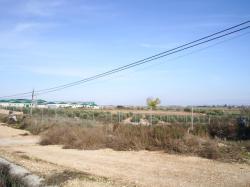 Paseo del Polígono de Balazote.